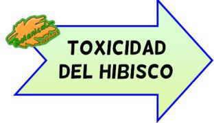 toxicidad del hibisco