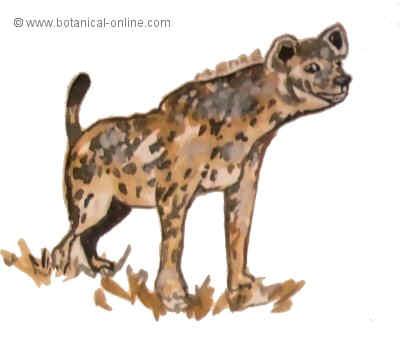 Dibujo de hiena