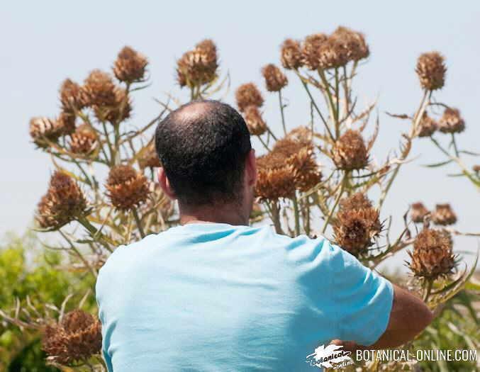 hierbacol herbacol cuajo natural