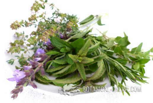 ajedrea hierba aromatica