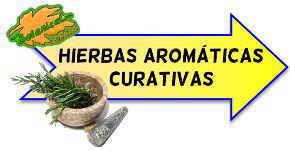 hierbas aromaticas propiedades