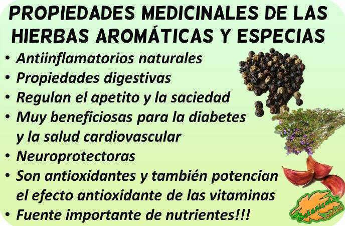 hierbas aromaticas especias propiedades medicinales