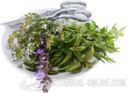 hierbas aromáticas mediterráneas tomillo, romero, menta, orégano, salvia