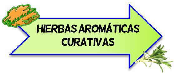 hierbas aromaticas curativas