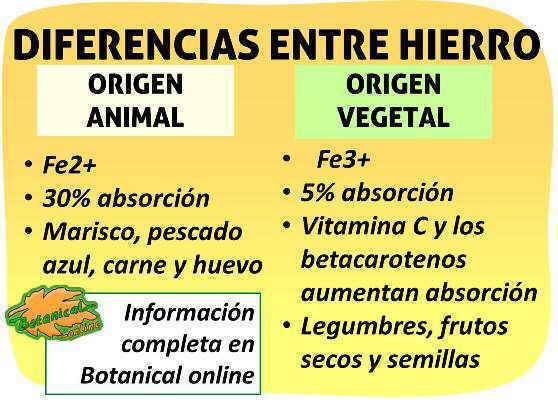 diferencias hierro de origen animal y vegetal fe2+ anemia