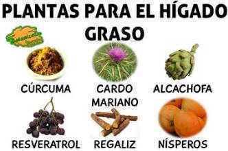 Plantas medicinales para el h gado graso - Alimentos para el higado graso ...
