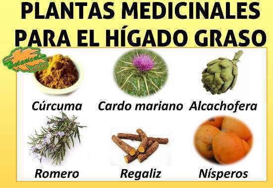 Tratamiento natural del h gado graso - Alimentos que curan el higado ...