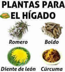 plantas medicinales para el higado