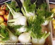 Recetas con hinojo for Cocinar hinojo