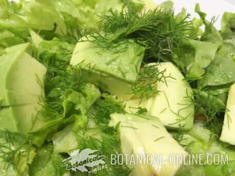 propiedades del hinojo, planta medicinal