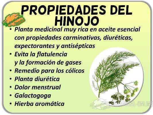 Propiedades Del Hinojo