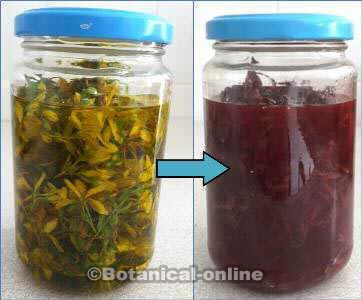 aceite de hiperico o hierba san juan color rojo