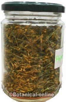foto hojas de hiperico para infusiones