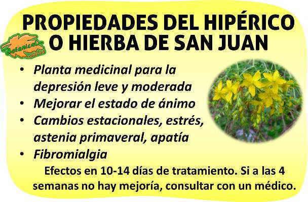 Propiedades hiperico o hierba de san juan para la depresion