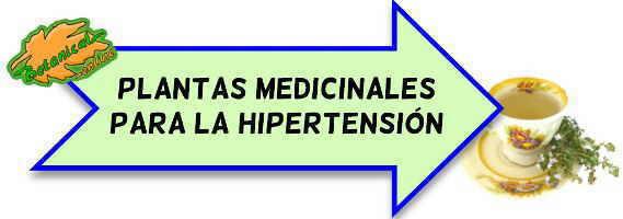 hipertension plantas medicinales y fitoterapia