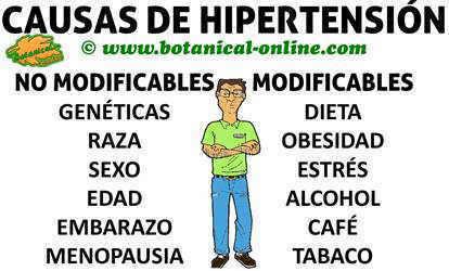 Causas de la hipertension