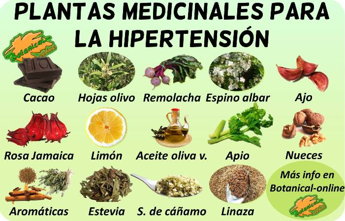 remedios naturales con plantas medicinales tratamiento natural hipertension