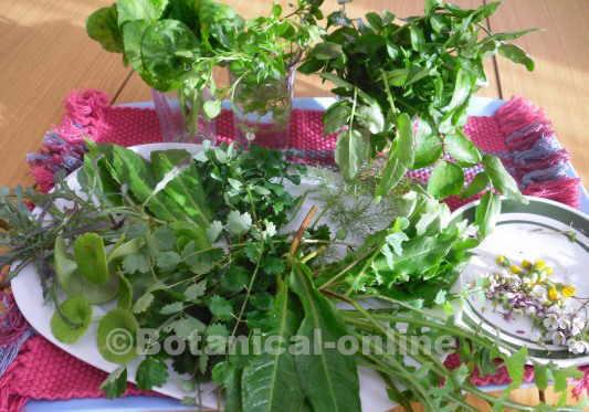 Hojas para ensalada con plantas silvestres comestibles