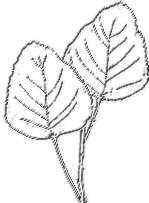 detalle de hojas