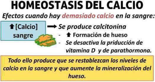homeostasis del calcio, aumento de calcio, calcitonina y hueso