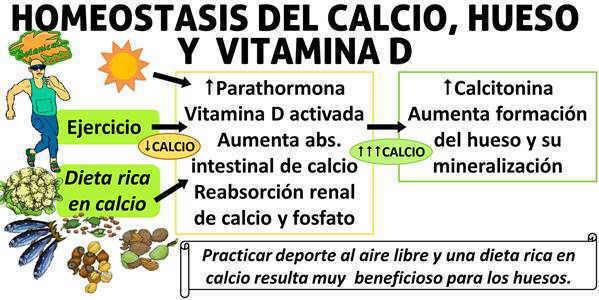 homeostasis del calcio, aumento de calcio, parathormona pth calcio hueso y vitamina d, formacion de masa osea con el ejercicio