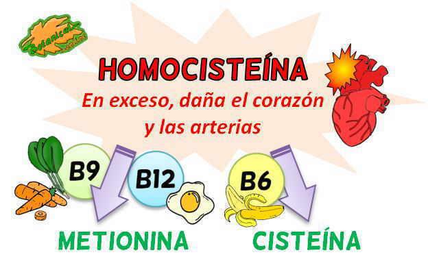 ciclo homocisteina vitaminas b6 b9 b12