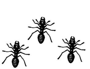 hormigas guerreras