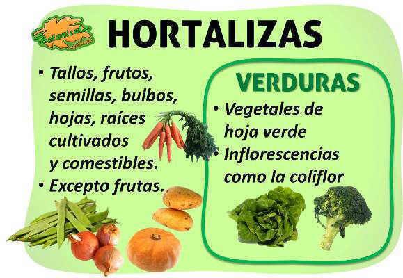 diferencias y características botanicas de las hortalizas y las verduras