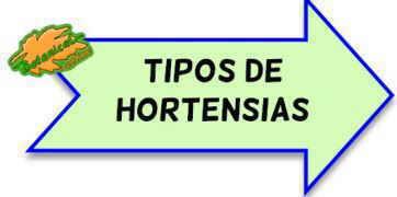 tipos de hortensias