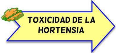 toxicidad de la hortensia