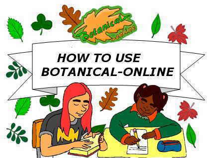 botanical-online quote