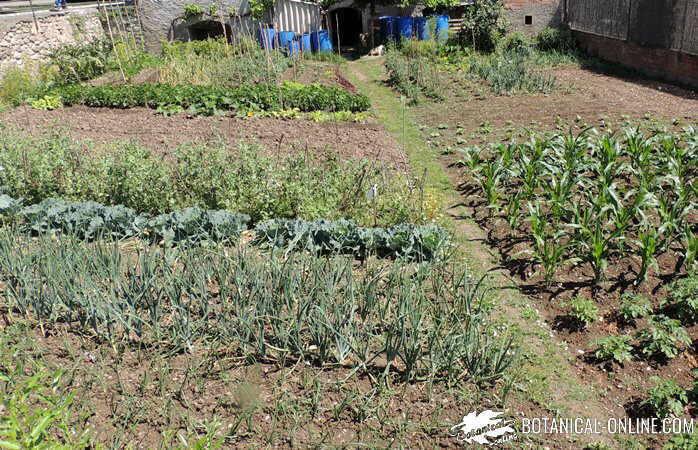 jardin de verduras y hortaliza