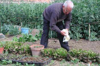 hombre en su huerto jardin