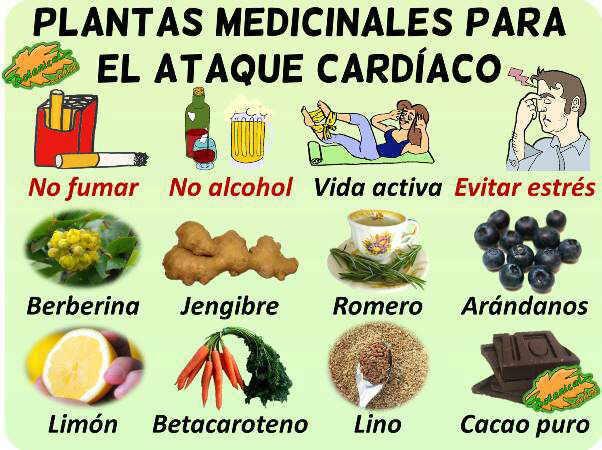 remedios naturales con plantas medicinales para tratamiento de la la remedio ataque cardiaco corazon