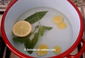 Infusión de jengibre, menta, laurel y limón