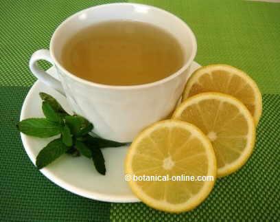 infusion menta limon