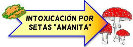 intoxicaciones amanita phalloides