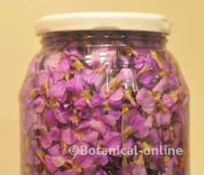 jarabe de violeta