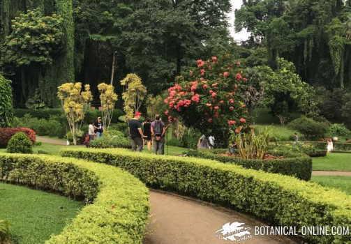 Rboles for Jardines con arboles y arbustos