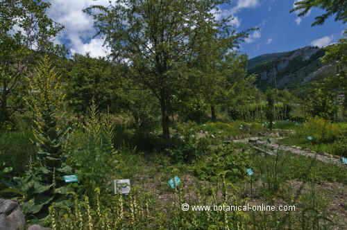 Jardin de plantas medicinales for Jardin botanico medicinal