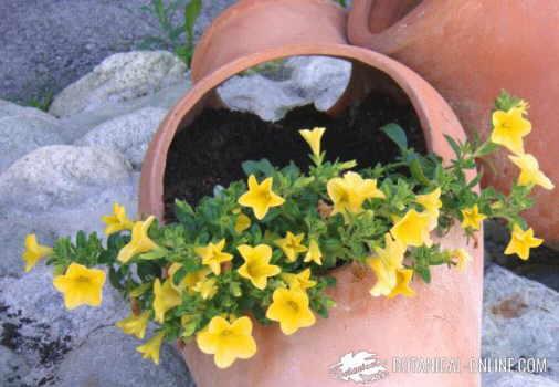 flores en maceta con humedad