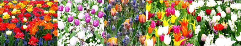 jardines tulipanes ejemplos