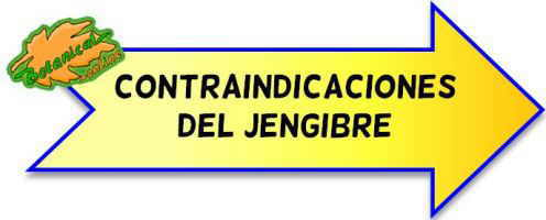 contraindicaciones del jengibre