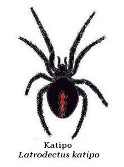 Viuda negra katipo