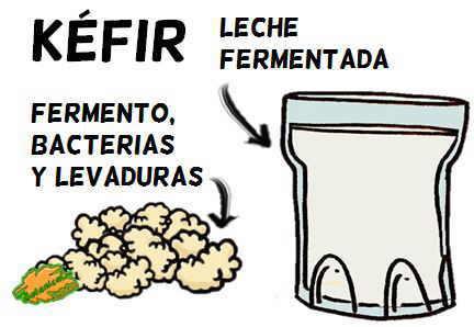 dibujo de kefir y fermentos de kefir definicion