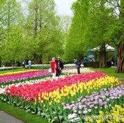 jardin keukenhof holanda tulipanes