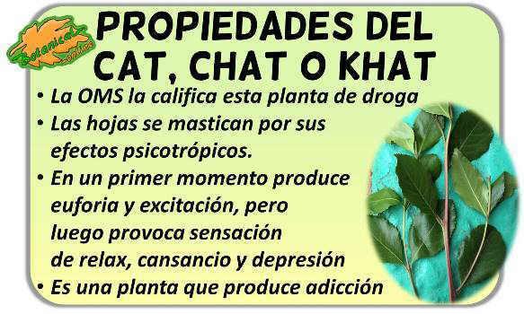 propiedades khat droga catha edulis