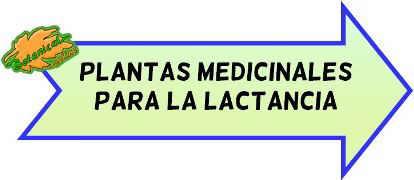 plantas medicinales lactancia