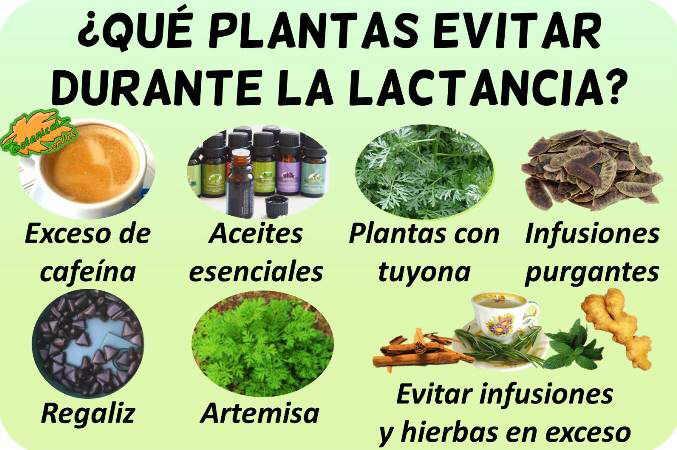 plantas prohibidas lactancia toxicas