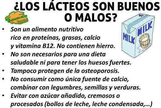 propiedades leche y lacteos si o no buenos o malos